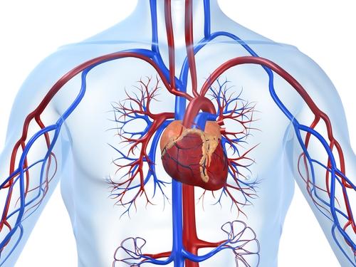 Wielostronne, korzystne i bezpieczne działanie kwasów omega 3 na układ sercowo-naczyniowy stwarza szerokie możliwości ich wykorzystywania w terapii kardiologicznej