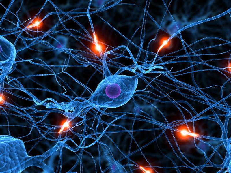 transmisji impulsów nerwowych